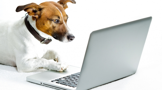 dog in front of laptop
